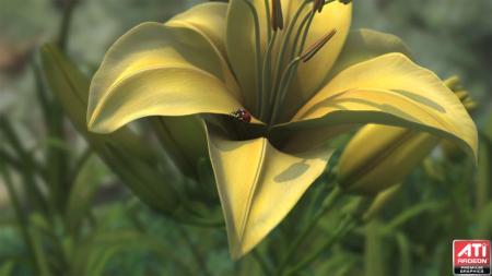 amd_ladybug_1